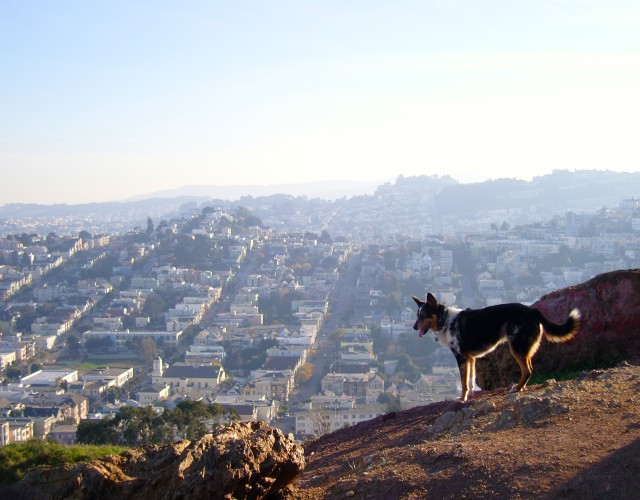 view_from_corona_heights_1