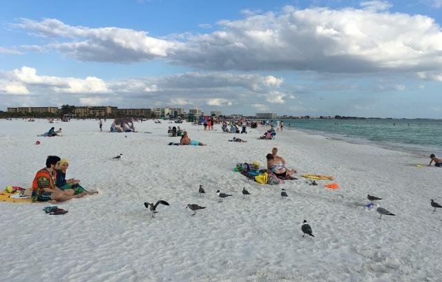 Laughing Seagulls at Coquina Beach