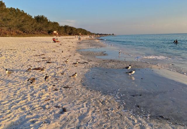 Cortez Beach Seagulls at Sunset