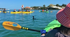 Adventure Kayak Guided Tour Cormorant among the Fleet