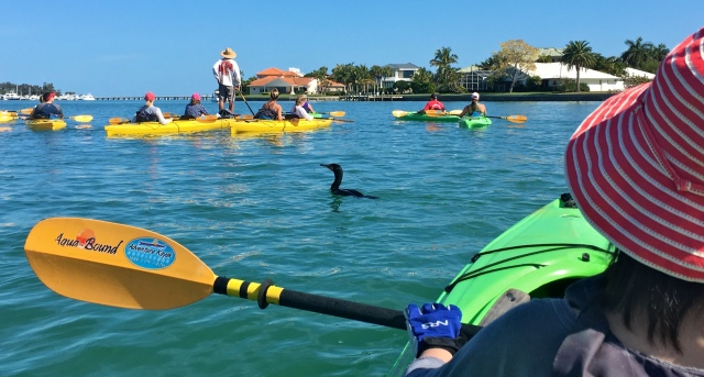 Adventure Kayak Guided Tour Cormorant among the Fleet