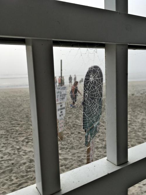 Spider web spun between deck railing