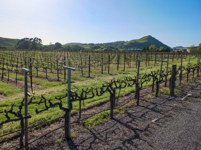 Wine Country - Random Napa Valley Vineyard on the side of a