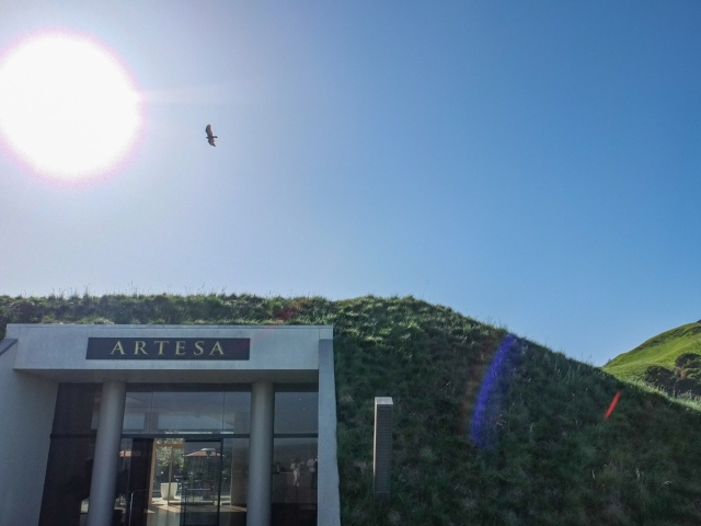 An Osprey flew over Artesa Vineyards & Winery Napa Valley