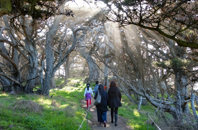 A walk in the woods at Point Lobos, Monterey Bay