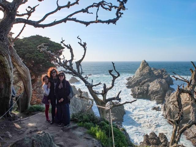 Trees at Point Lobos, Monterey Bay