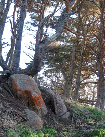 Two skulls found in the woods at Point Lobos, Monterey Bay - Mimetoliths - Rock Shapes