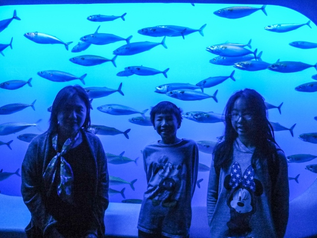 Sardine tank at Monterey Bay Aquarium